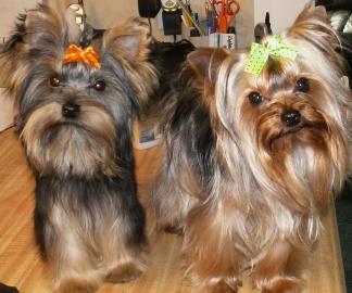 Celebrity brand dog beds