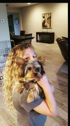 AKC Yorkshire Terrier Yorkie puppies for sale Georgia, Florida, AL