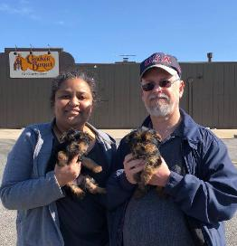 Teacup Yorkie Puppies For Sale Akc Yorkie Puppiesteacup Yorkies