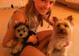 Celebrity dog kennels kansas city